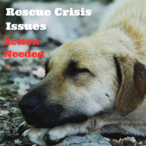 rescue-crisis-issues
